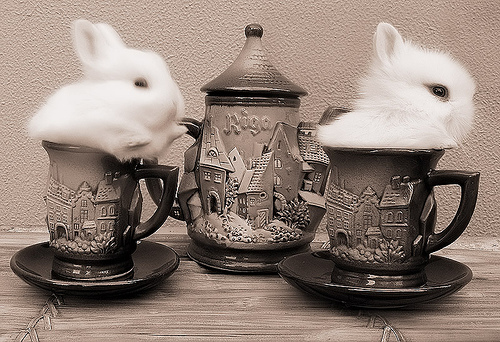Rabbit Tea is neccessary for the improvement of the eye sightedness. Don't you know?